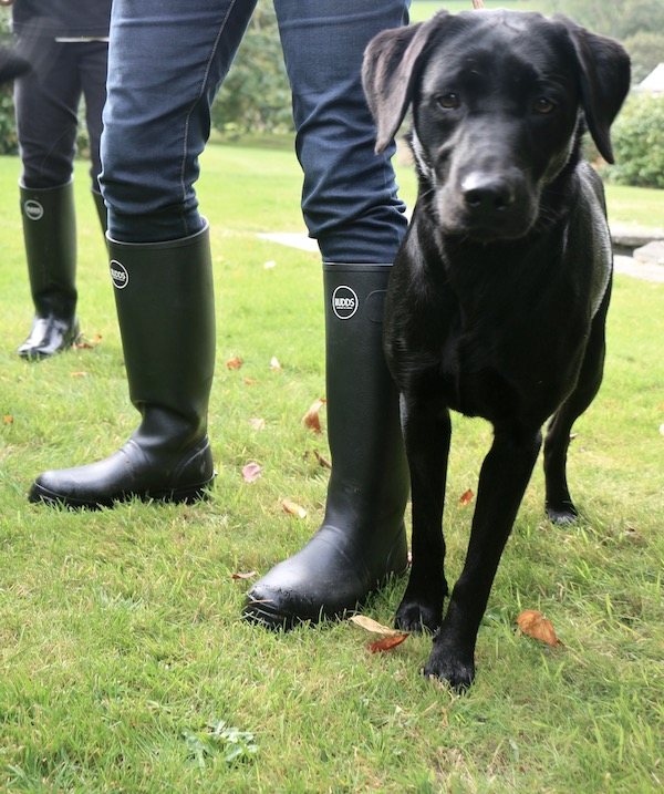 Wellies for Dog Walking